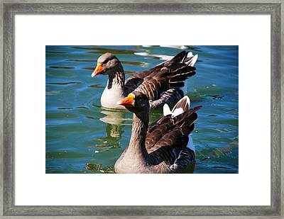 Framed Print featuring the photograph Twins by Linda Segerson