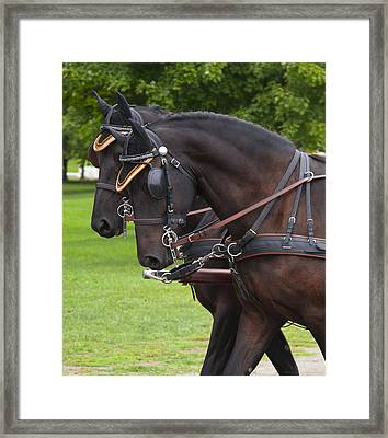 Twins Framed Print by Phil Abrams