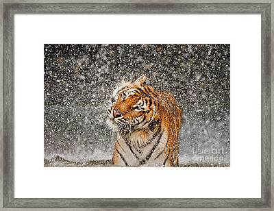 Twist And Shake Framed Print by Ashley Vincent