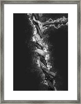 Twisted 2 Framed Print