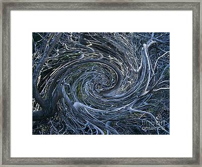 Twisted Briar Framed Print by Drew Shourd