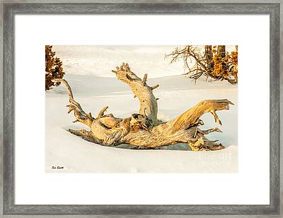 Twisted Dead Tree Framed Print by Sue Smith