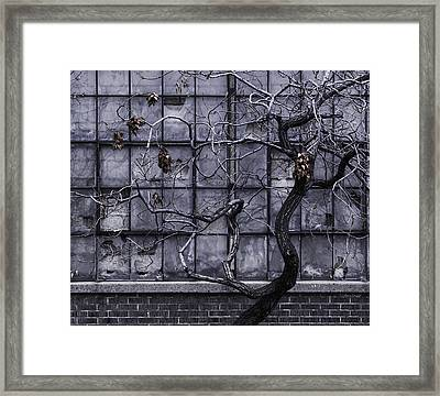 Twisted Decay - Abstract Metaphor  Framed Print