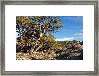 Framed Print featuring the photograph Twisted Existence by Eric Rundle