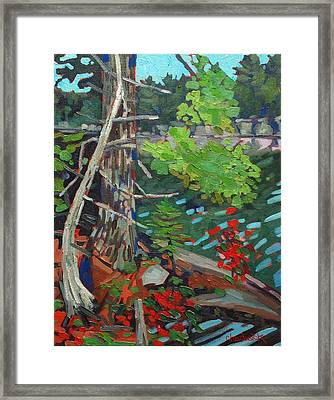 Twisted Island Framed Print by Phil Chadwick