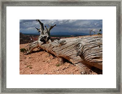 Framed Print featuring the photograph Twisted by Jon Emery