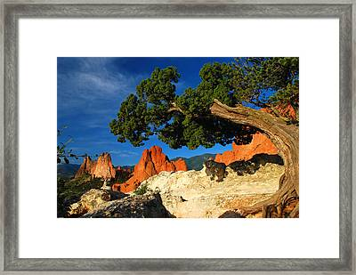 Twisted Juniper At The Garden Framed Print