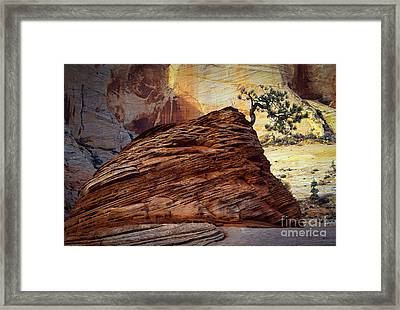 Twisted Juniper Framed Print by Inge Johnsson