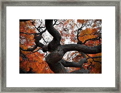 Twisted Framed Print by Kristopher Schoenleber