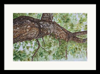 Realistic Rough Bark Framed Prints