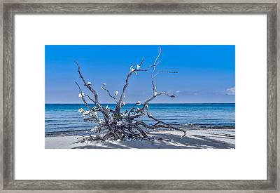 Twisted Framed Print by Phil Abrams