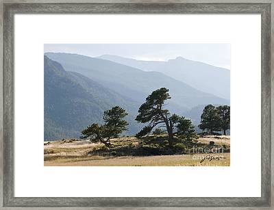 Twisted Pines Framed Print