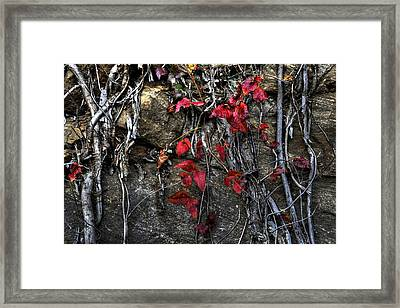 Twisted Red Framed Print