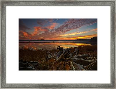 Twisted Roots Framed Print by William Sanger