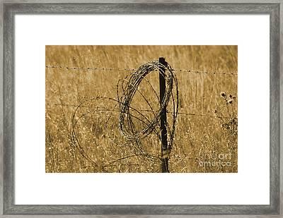 Twisted - Sepia Framed Print