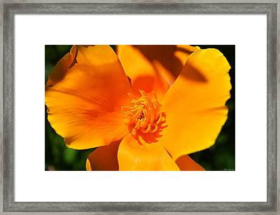 Twisted And Shadows Framed Print by Felicia Tica