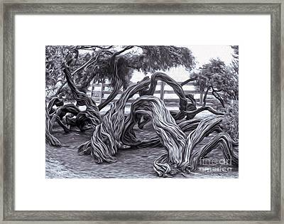 Twisted Tree - 01 Framed Print by Gregory Dyer