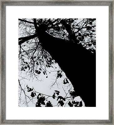 Framed Print featuring the photograph Twisted Tree by Candice Trimble