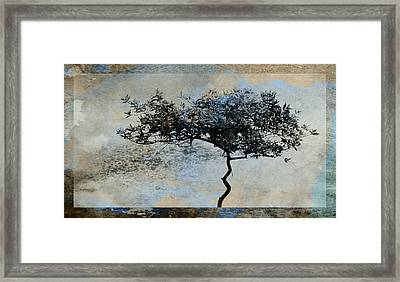 Twisted Tree Framed Print by David Ridley