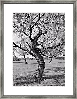 Twisted Tree Framed Print by Elizabeth Budd
