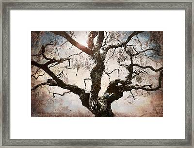 Twisted Tree I Framed Print by April Moen