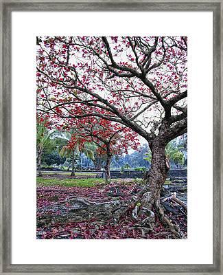 Twisted Tree Of Hilo Framed Print by Daniel Hagerman