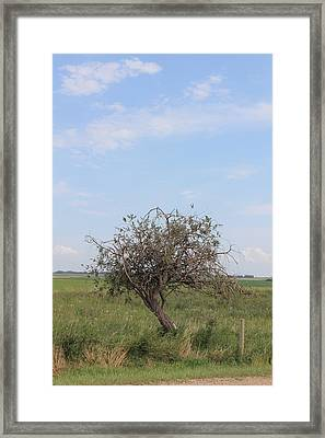 Twisted Tree Framed Print by Susan Copley