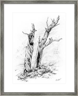 Twisted Trees Framed Print by Aaron Spong