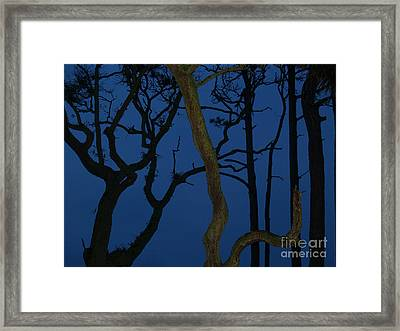 Twisted Trees At Twilight Framed Print by Anna Lisa Yoder