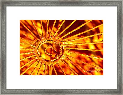 Twisted Trust Framed Print by Cathy Dee Janes