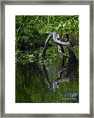 Framed Print featuring the photograph Twisted Wood by Ken Frischkorn