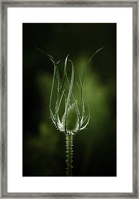 Twisting Beauty Framed Print