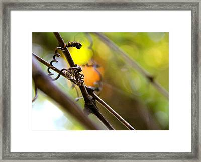 Twists And Turns Framed Print by Tracy Male