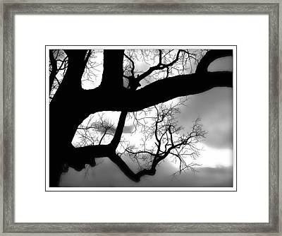 Twisty Tree Silhouette Framed Print by Ellen Tully