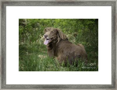 Twix Framed Print by Donna Cloutier