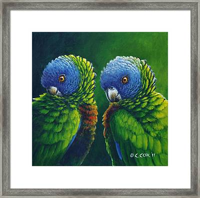 Two - St Lucia Parrots Framed Print by Christopher Cox