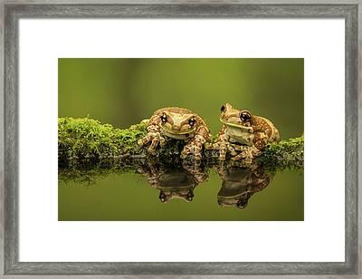Two Amazon Milk Frogs Framed Print by Markbridger