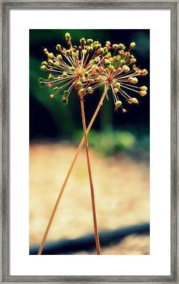 Framed Print featuring the photograph Two by Amee Cave