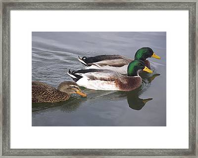 Two-and-a-half Ducks Framed Print by Mike and Sharon Mathews