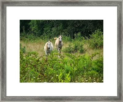 Two Appaloosa Horses  Framed Print