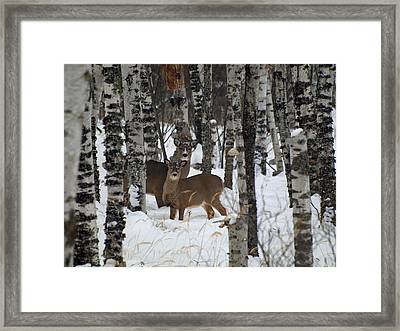 Two Are Better Than One Framed Print by James Peterson
