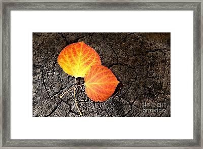 Two Aspen Leaves Framed Print