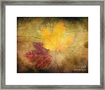 Two Autumn Leaves Framed Print