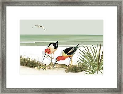 Two Avocets Framed Print by Anne Beverley-Stamps