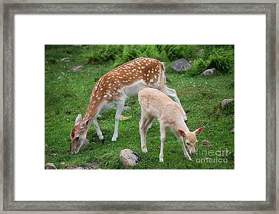 Two Babes Framed Print