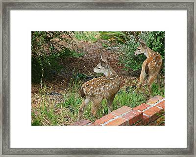 Two Baby Deer Framed Print