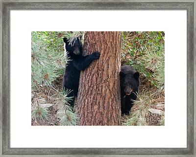 Two Bears Framed Print