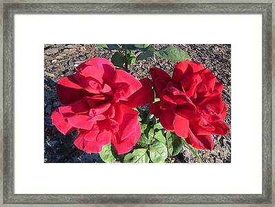 Two Beauties Framed Print by Zina Stromberg