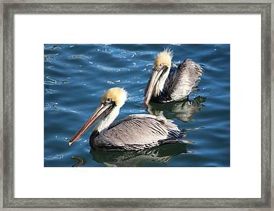 Two Beautiful Pelicans Framed Print by Cynthia Guinn
