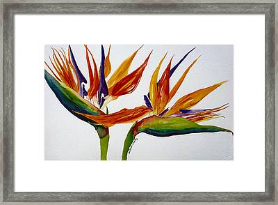 Two Birds Of Paradise Framed Print by Susan Duda